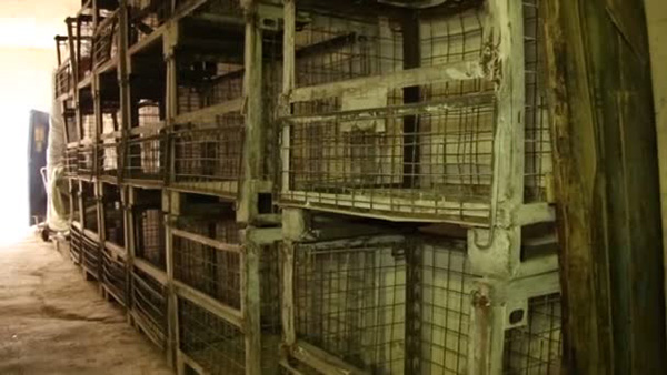 European Parliament Overwhelmingly Backs Ban On Caged Animal Farming